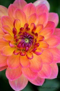 translucent flower