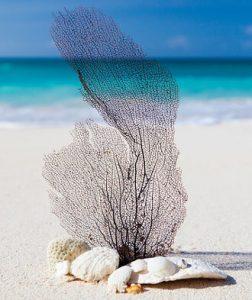Beach-shells
