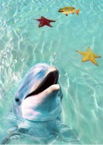 beach-dolphins