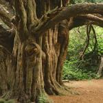 Tree Spirit Healing