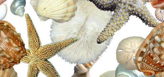 Seashell Healing